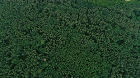 temperada : Aerial shot of woodland and nature scenery. Green tree tops and field landscape flyover