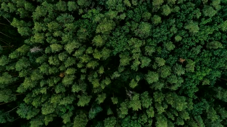 temperada : Zoom out from tree tops. Green forest aerial view. Wildlife nature landscape