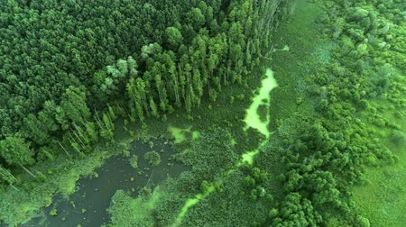 wasteland : Environment protection. Flying over green forest and swamp landscape. Aerial view Stock Footage