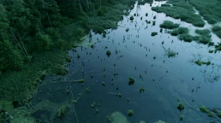 wasteland : Nature preservation and forest swamping. Flying over green water landscape with fallen trees