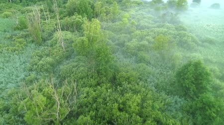 megőriz : Green landscape in the mist aerial view. Flying over leafy trees and swampy area. Stock mozgókép
