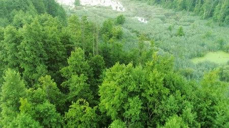 rezervasyon : Green landscape aerial view. Leafy forest and swamp flyover. Nature beauty