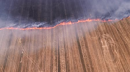 steppa : Uncontrolled rural fire. Burning plant field. Smoke. Countryside landscape.