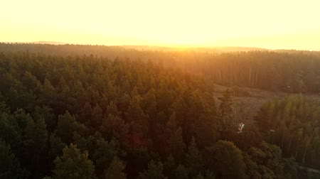 origin : Forest landscape aerial view. Ecology green planet. Countryside skyline sunrise lens flare.