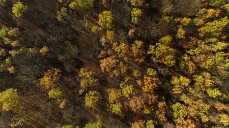 desenvolvimento : Autumn forest aerial view. Peace harmony tranquility. Colorful trees scenery. Vídeos