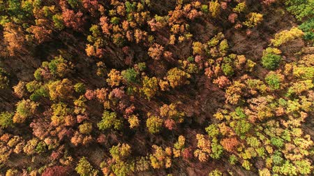 outlook : Fall nature colors. Outlook intelligence experience. Forest trees crowns aerial shot.