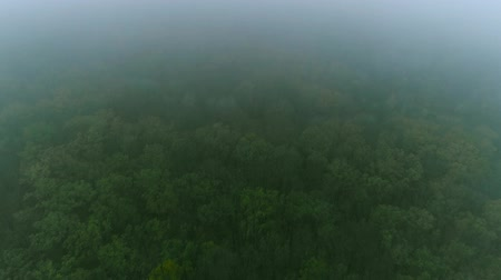 fade in : Foggy countryside aerial shot. Forest protection. Green yellow trees fading away in smoke. Stock Footage