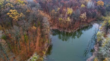 географический : Autumn nature drone view. Transformation change projection. Flooded forest scenery. Стоковые видеозаписи