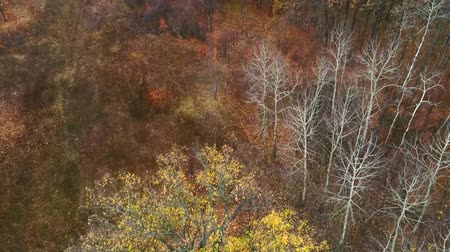 географический : Autumn countryside aerial shot. Revival expectation. Faded forest trees. Rural field foggy skyline.