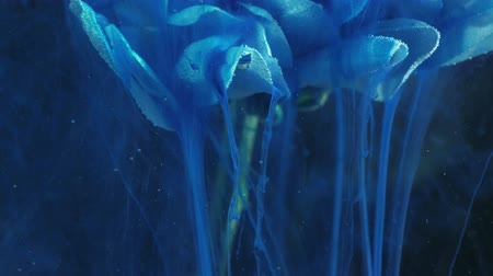 um objeto : Color fume motion. Fantasy waterfall. Phantom blue paint flow from white flower petals. Stock Footage