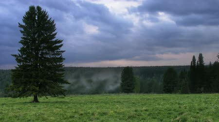 softwood forest : timelapse evening landscape Stock Footage