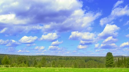 táj : timelapse nature scene green field, coniferous forest, and flying clouds Stock mozgókép