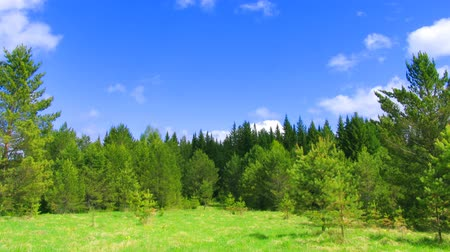 pasture land : timelapse clouds above summer forest during sunny day Stock Footage