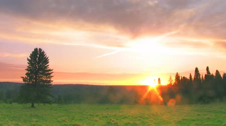 луг : timelapse sunset nature scene tree on field against forest Стоковые видеозаписи