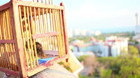 liberated : birds fly out of cage