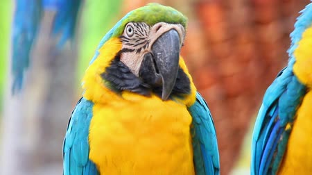 ara papagáj : portrait of colorful parrot macaw