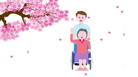 invalidní vozík : Street in spring cherry blossoms bloom for the elderly and care