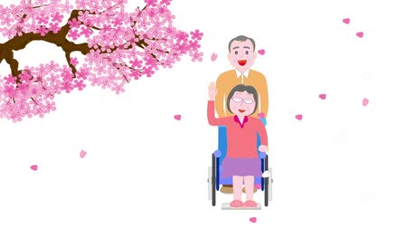 uzun ömürlü : Elderly women in a wheelchair that walk around blooming cherry blossoms in spring and her husband