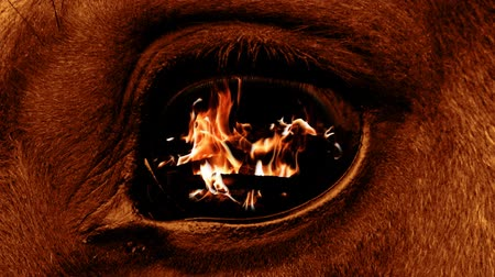 villain : The fire is burning in the eye of a terrible beast Stock Footage