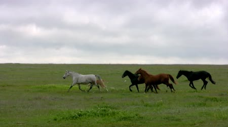 stádo : Herd of horses running on the steppes in the background cloudy sky