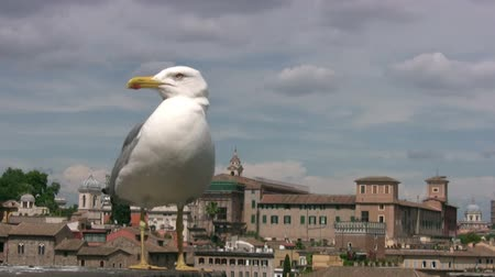 racek : Day. Sunny but the sky storm clouds gather. Against the background of the old city (Venice) is a seagull close up. Seagull turns his head and opens his beak