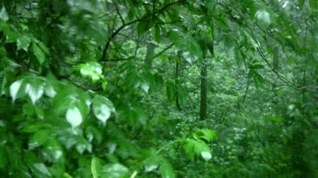 esőerdő : Deciduous forest. Heavy rain pours on a juicy green leaves. Raindrops produce characteristic smearing on the glass in front of camcorder