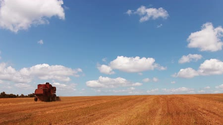 anız : Harvester working in the field. Blue sky. The clouds are flying fast (timelapse) Stok Video