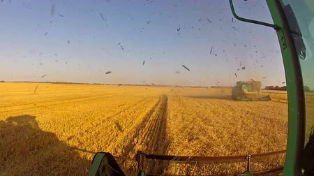 cultivar : Harvesting. Shooting from a moving combine. The second harvester drives near Vídeos