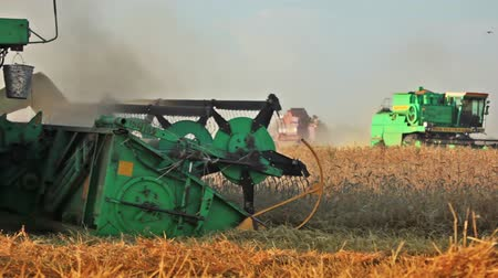 cultivar : Summer. Sunny day. Harvest time. Three combines in wheat field