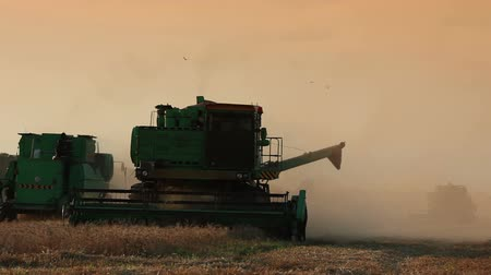 farmer animals : Summer. Harvesting. Harvesters moves on the field. Harvester the foreground preparing to unload grain Stock Footage