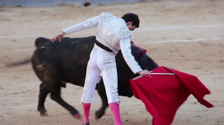 bullfight : Spain. Madrid. Bullring Las Ventas. Bullfighter, armed with a sword and muleta plays with a bull