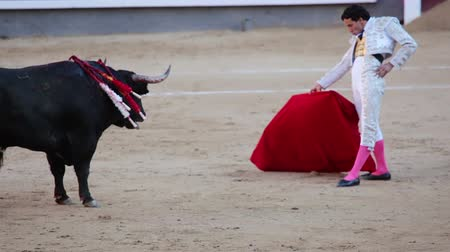 bullfight : Spain. Madrid. Bullring Las Ventas. Bullfighter talks with the bull in the language of the bull