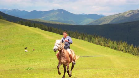 koňmo : Summer. Green valley. Forest and mountains on the horizon. Cows eat grass. Rider on a horse bareback fast approaching Dostupné videozáznamy