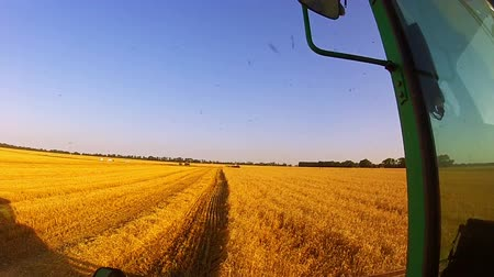 farm equipment : Cloudless sunny day. Harvesting. The camera is mounted on a moving harvester near the drivers cab
