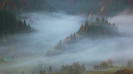 долина : Autumn in the forested mountains. Early in the morning. Dense fog in the valley Стоковые видеозаписи