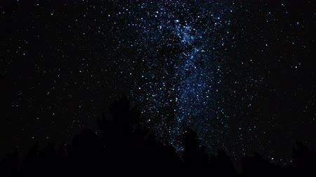 Dark starry night in the fir forest. Myriads of stars in the Milky Way Galaxy over his head