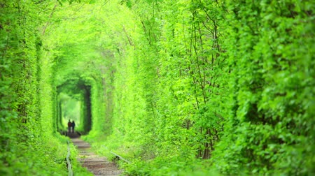Украина : Ukraine. Young couple walking through a tunnel of spring trees