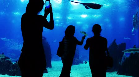 viagem por estrada : Oceanarium. Silhouettes of unrecognizable adults and children. People watch and take pictures of the amazing underwater world