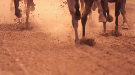 horse racing : Horse racing. Legs of horses close-up. A lot of dirt under his hooves. Slow motion Stock Footage