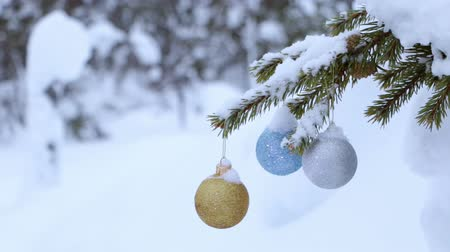вешать : Winter forest. Three shiny Christmas ball on snowy spruce branch and shaking in the wind. Light snowfall