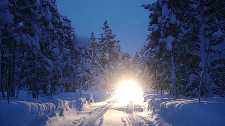 jungle : Snowy road in night winter forest. Car with headlights approaching and illuminates the thick snowfall Stock Footage