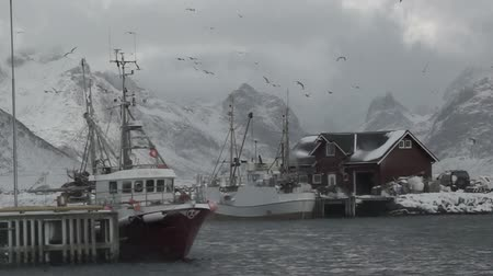 port n : Winter Norway. Cloudy. Two small fishing boats are in the harbor. A lot of seagulls over the harbor. Snowstorm. Slow motion