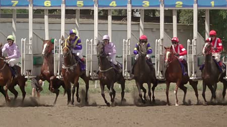гонка : Horse racing Starting wickets and horses close-up. Slow motion