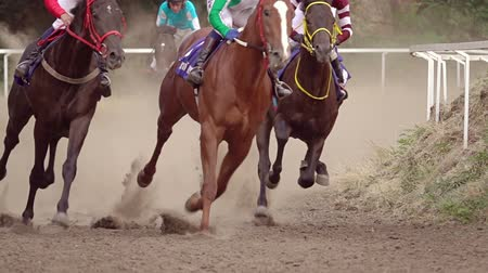 кнут : Horse racing at the summer racetrack. Riders on horses undergo a turn. Slow motion