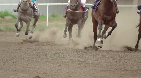 lovas : Horse racing at the racetrack. A group of riders pass the curve. Slow motion Stock mozgókép
