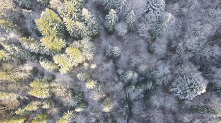 Wild forest in the morning at the beginning of winter. All branches are covered with hoarfrost. The camera is pointing vertically down. Aerial view