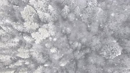 Forest at the beginning of winter. All branches are covered with hoarfrost. Snowfall The camera is pointing vertically down. Aerial view