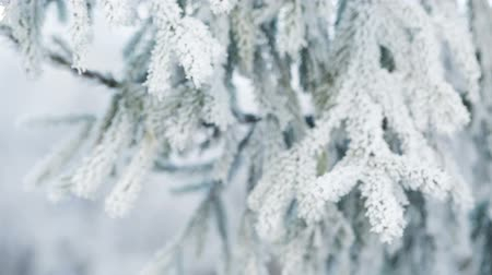 крытый : Fir branches covered with hoar frost, slide movement shoot in RAW Стоковые видеозаписи