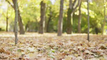 mudança : slow motion footage falling autumn leaves in park Vídeos