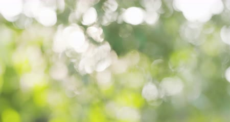 blur : natural summer bokeh blur background with green leaves Stock Footage